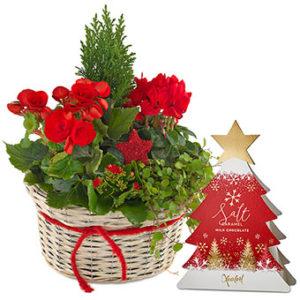 Julgrupp med blandade julblommor i rött plus en ask med chokladpraliner. Gåvosetet finns att beställa hos Euroflorist, en av de största blomsterförmedlingarna på nätet.