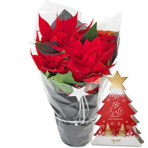 Röd julstjärna och en förpackning choklad. Ett gåvoset från Euroflorist.