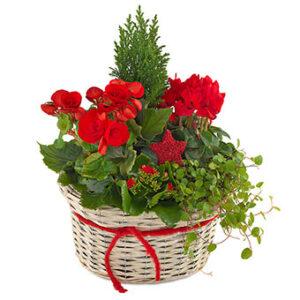 Låt floristen sätta ihop en fin julgrupp! Rund grupp med grönt och röda julblommor blir det:) Ett alternativ hos Euroflorist.