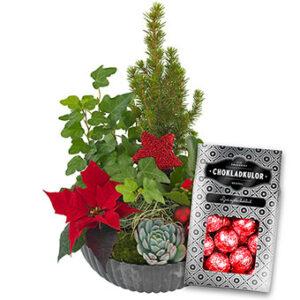 Julgrupp med röda julstjärnor, taklök, murgröna och en. Plus en påse läckra chokladkulor. Från Euroflorist.