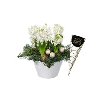 Vita hyacinter, gran, tall, julkulor och en chokadstrut. En julgrupp ur Interfloras sortiment av julblommor.