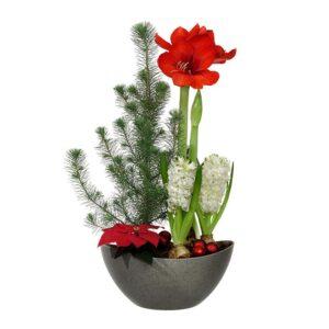 En klassisk stor julgrupp, med röd amaryllis, hyacinter, julstjärna och silvertall. Finns att beställa som blombud hos Interflora.
