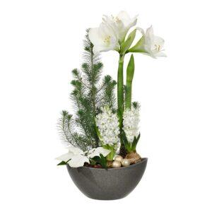 Julgrupp med hyacinter, julstjärna och silvertall. Vita blommor. Ur Interfloras julsortiment.