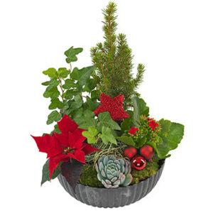 Klassisk julgrupp i rött och grönt. Den finns i tre olika storlekar hos Euroflorist.