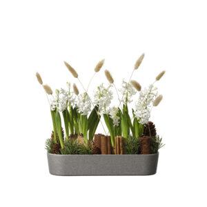 Avlång julgrupp med hyacinter, kanel, kottar, grönt och hartassar. Beställ ett blomsterbud hos Interflora - skicka din julgåva ända hem till mottagarens dörr!