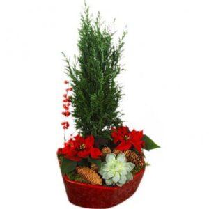 Julgrupp i röd skål, med röda minijulstjärnor, echeveria, en, ilexkvistar och grönt. Beställ julgruppen online hos Florister i Sverige - skicka den med bud!